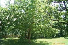 Hausgarten mit Obstbäumen